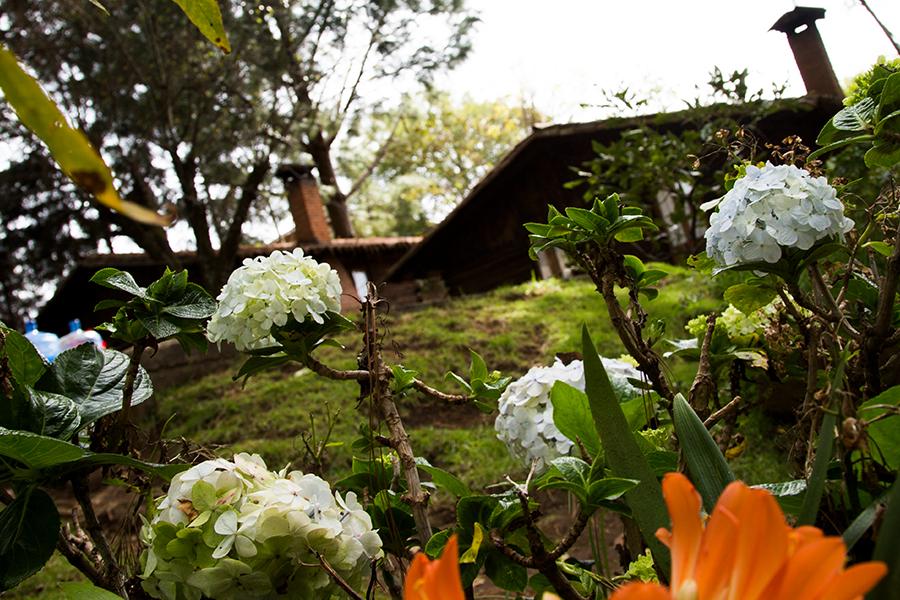Galeria-Venados-jardin-
